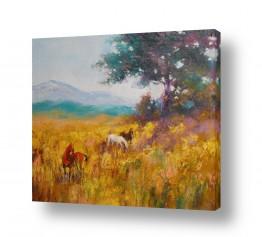 ציורים בעלי חיים | סוסים בשדה