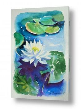 ציורים ציור בצבעי מים | לוטוס