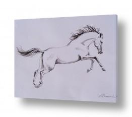 חיות חיות מחמד | סוס לבן