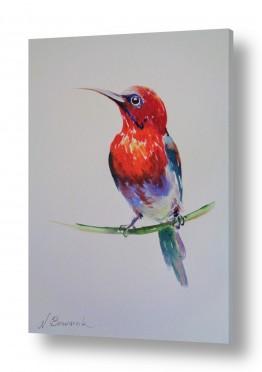 ציורים בעלי חיים | ציפור אדומה