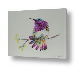 ציורים בעלי חיים | ציפורה סגולה
