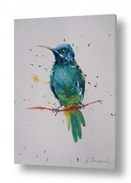 ציורים בעלי חיים | טורקיז