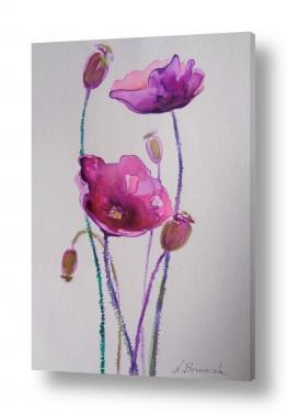 פרחים פרגים | פרחים סגולים