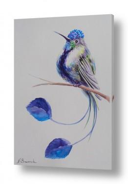 ציורים בעלי חיים | ציפור העדן