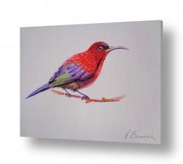 ציורים בעלי חיים | ציפור
