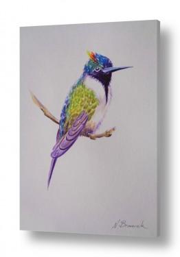 ציורים בעלי חיים | ציפור צבעני