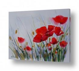 פרחים פרגים | פרחי בר