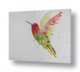 ציורים נטליה ברברניק | ציפור אקןןרל
