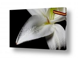 צילומים סטודיו | flowers