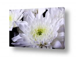 צמחים פרחים | פרחים