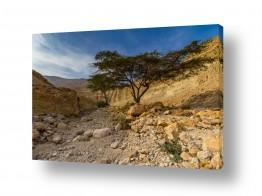 נוף מדבר | wadi Zohar