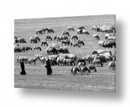 צילומים כפרי | ארץ פלשת 3