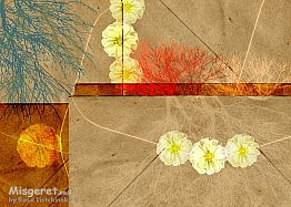 מעטפה ופרח