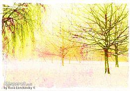 יער צהוב