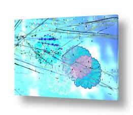 ציורים אמנות דיגיטלית | פרח תכלת