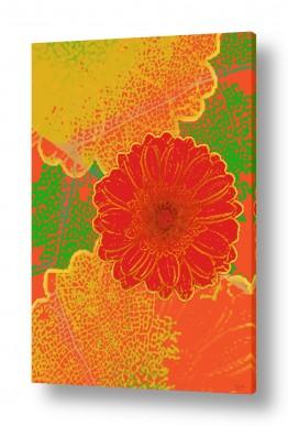 ציורים אמנות דיגיטלית | פרח אדום