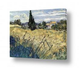 אמנים מפורסמים וינסנט ואן גוך   Green Wheat field