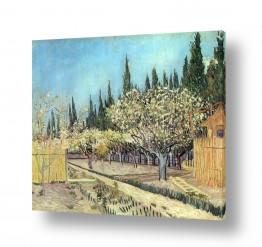 אמנים מפורסמים וינסנט ואן גוך | Orchard Blossom,Bordered