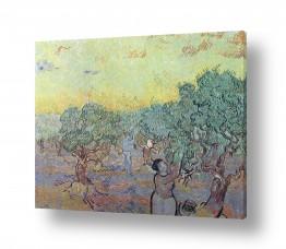 אמנים מפורסמים וינסנט ואן גוך |  Olive Grove with Pickin
