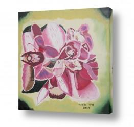 פרחים סחלב | סחלבים