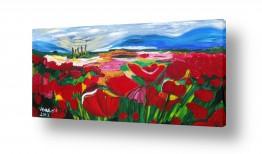 צומח פרחים | ,שדה כלניות