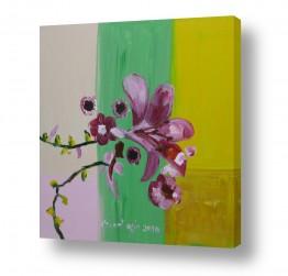 פרחים סחלב | סחלב במראה