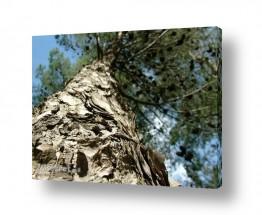 תמונות לפי נושאים צמרות | עד צמרות העצים
