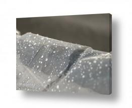 תמונות לפי נושאים רטוב | טיפות גשם