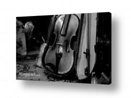 צילומים מוסיקה | כינור למכירה