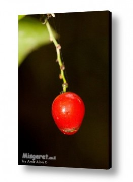 תמונות לפי נושאים רטוב | פרי אדום