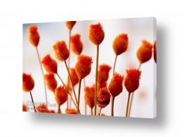 צמחים עלה | ניצנים מלאכותיים