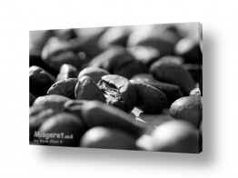 תמונות לפי נושאים קפה | קפה ?