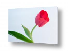 פרחים אבקנים | צבעוני 3