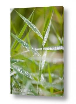 תמונות לפי נושאים רטוב | צמחיית בוקר