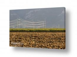 שדות שדות כותנה | חשמל טבעי