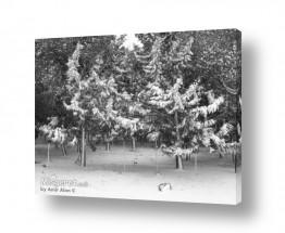 ענפים לבנים