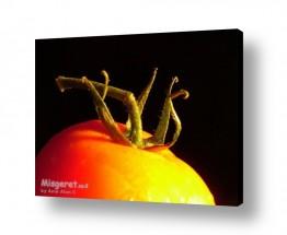 צילומים אוכל | עגבניה