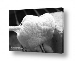 צילומים אוכל | מרשמלו