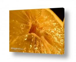 תמונות לפי נושאים בריאות | לימון טרי
