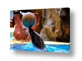 חיות מים כלב ים | פרת ים?כלב ים?העיקר לשח