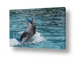 חיות מים דולפין | משחקים