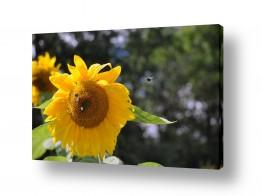 פרחים אבקנים | מימינך...מימינך