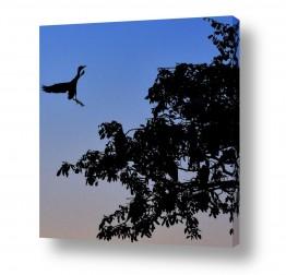 צילומים תעופה | הנה אני באה...