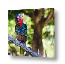 ציפורים תוכי | שלל צבעי הקשת