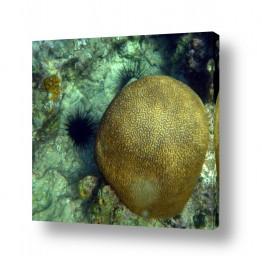 צילומים תת-מיימי | אלמוג מוח או מוח אלמוגי?