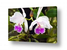 פרחים סחלב | חיוך בסגול