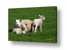 נושאים בעלי חיים - חיות | אביב