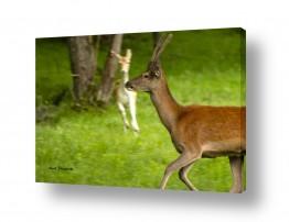 נושאים בעלי חיים - חיות | יופי פראי