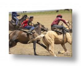 חיות יונקים | סוסים