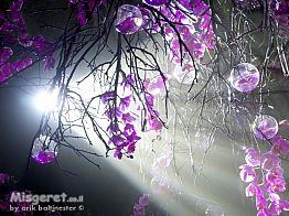 ביער הסחלבים 03